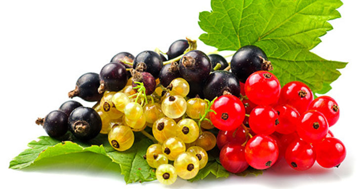Health benefits of Currants