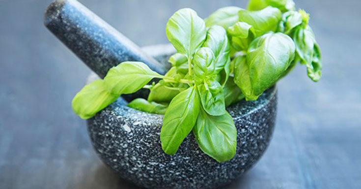 Healing benefits Basil